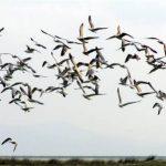 Bird Watching In Tarifa